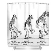 Ernst Haeckel, Evolution Of Man, 1879 Shower Curtain