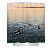 Escaping Geese  Shower Curtain