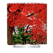 Essence Of Japanese Maple Tree Shower Curtain