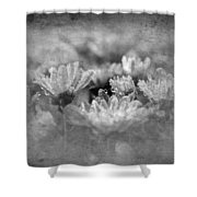 Etched In Stone 6 Shower Curtain
