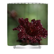 Eternal Harmony Shower Curtain