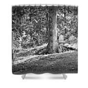Eternity In The Woods Shower Curtain