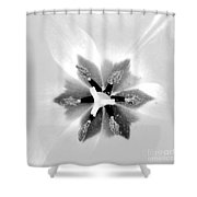 Etoile A Six Branches Shower Curtain