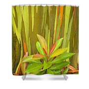 Eucalyptus And Leaves Shower Curtain