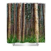 Eucalyptus Forest Shower Curtain