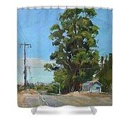Eucalyptus Tree Near Schellville, Ca Shower Curtain