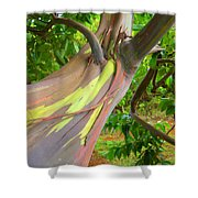 Eucalyptus Tree Shower Curtain