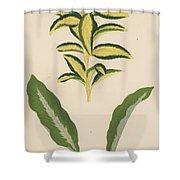 Euonymus Japonica Aurea Variegata, Maranta Micans Shower Curtain