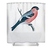 Eurasian Bullfinch Artwork Shower Curtain
