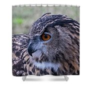 Eurasian Eagle Owl Shower Curtain