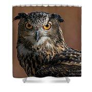 Eurasian Eagle Owl Iv Shower Curtain