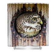 Eurasian Pygmy Owl In Profile Shower Curtain