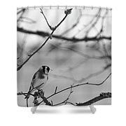 European Goldfinch 1 Shower Curtain