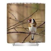 European Goldfinch 3 Shower Curtain