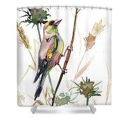 European Goldfinch In The Field Shower Curtain