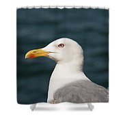European Herring Gull Portrait Shower Curtain