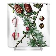 European Larch, Pinus Larix Shower Curtain
