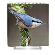 European Nuthatch Shower Curtain