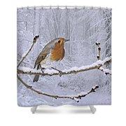 European Robin On Snowy Branch Shower Curtain