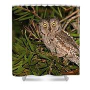 European Scops Owl  Shower Curtain