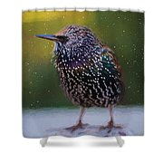 European Starling - Painted Shower Curtain