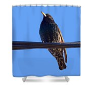 European Starling Trasparent Background Shower Curtain