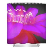 Evening At The Ballet Shower Curtain