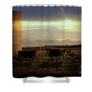 Evening Cows Shower Curtain