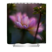 Evening Dahlia Shower Curtain