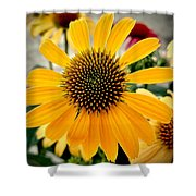 Evening Flower Shower Curtain