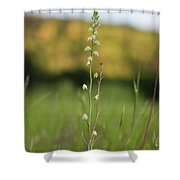 Evening Hartweg's Shower Curtain