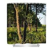 Evening In The Sunshine Shower Curtain