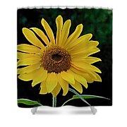 Evening Sunflower Shower Curtain