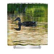 Evening Swim Shower Curtain