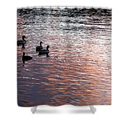 Evening Swim Shower Curtain