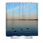 Evening Swimming Geese Three  Shower Curtain