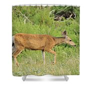Evening Visitor 2 Shower Curtain