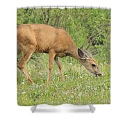 Evening Visitor Shower Curtain
