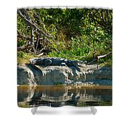 Everglades Crocodile Shower Curtain