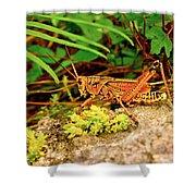 Everglades Locust Shower Curtain