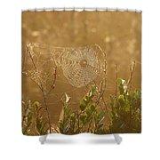 Everglades Morning Shower Curtain