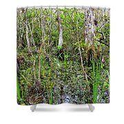 Everglades Swamp Two Shower Curtain
