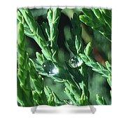 Evergreen Dew Shower Curtain