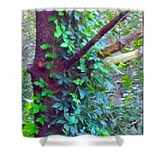 Evergreen Tree With Green Vine Shower Curtain