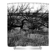 Every Which Way But Loose Shower Curtain