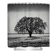 Everybody Has One Shower Curtain