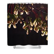 Everyday Wonders Shower Curtain