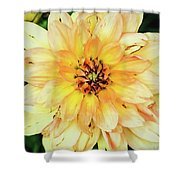 Everything Has Beauty Shower Curtain