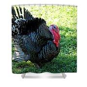 Evil Eye From Foul Turkey Shower Curtain