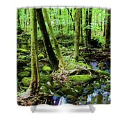 Evolution Of A Forest In Spring  Shower Curtain